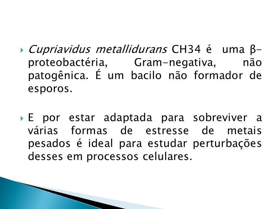 Cupriavidus metallidurans CH34 é uma β- proteobactéria, Gram-negativa, não patogênica. É um bacilo não formador de esporos.