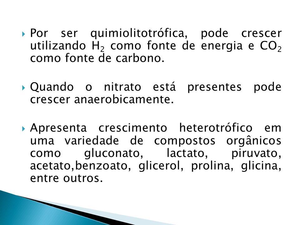 Por ser quimiolitotrófica, pode crescer utilizando H2 como fonte de energia e CO2 como fonte de carbono.