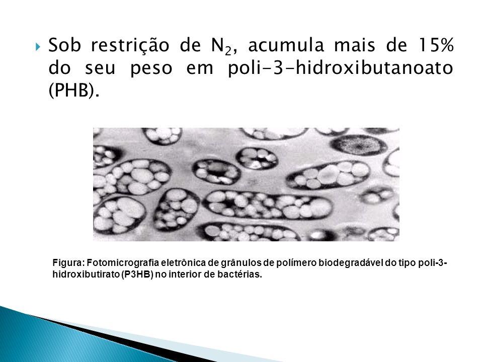 Sob restrição de N2, acumula mais de 15% do seu peso em poli-3-hidroxibutanoato (PHB).