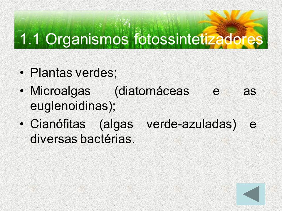 1.1 Organismos fotossintetizadores