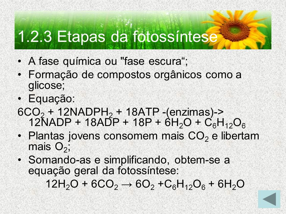 1.2.3 Etapas da fotossíntese