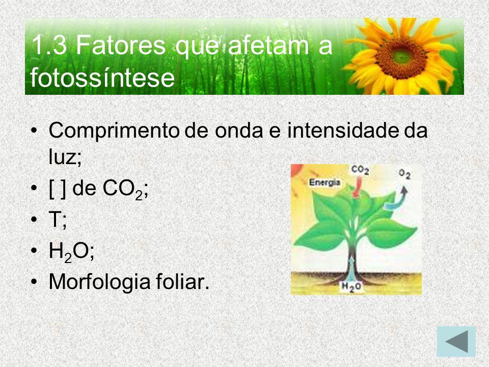 1.3 Fatores que afetam a fotossíntese