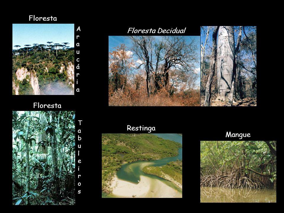 Mangue Restinga Floresta Araucária Floresta Decidual Tabuleiros