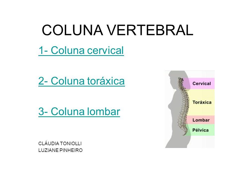 COLUNA VERTEBRAL 1- Coluna cervical 2- Coluna toráxica