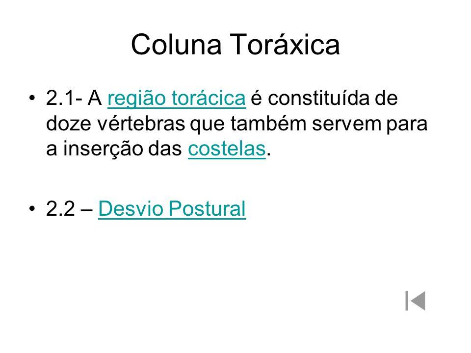 Coluna Toráxica2.1- A região torácica é constituída de doze vértebras que também servem para a inserção das costelas.