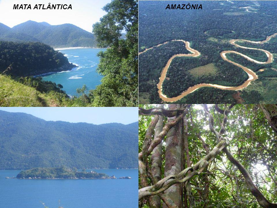 MATA ATLÂNTICA AMAZÔNIA