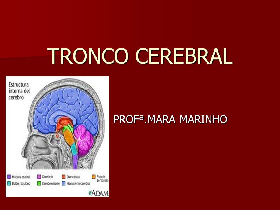 TRONCO CEREBRAL PROFª.MARA MARINHO