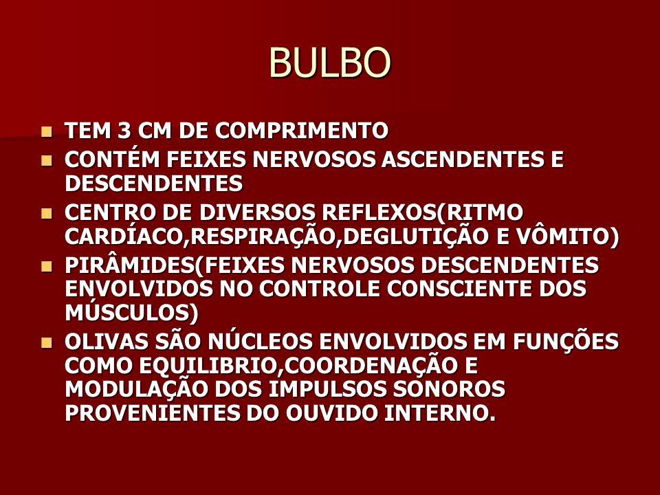 BULBO TEM 3 CM DE COMPRIMENTO