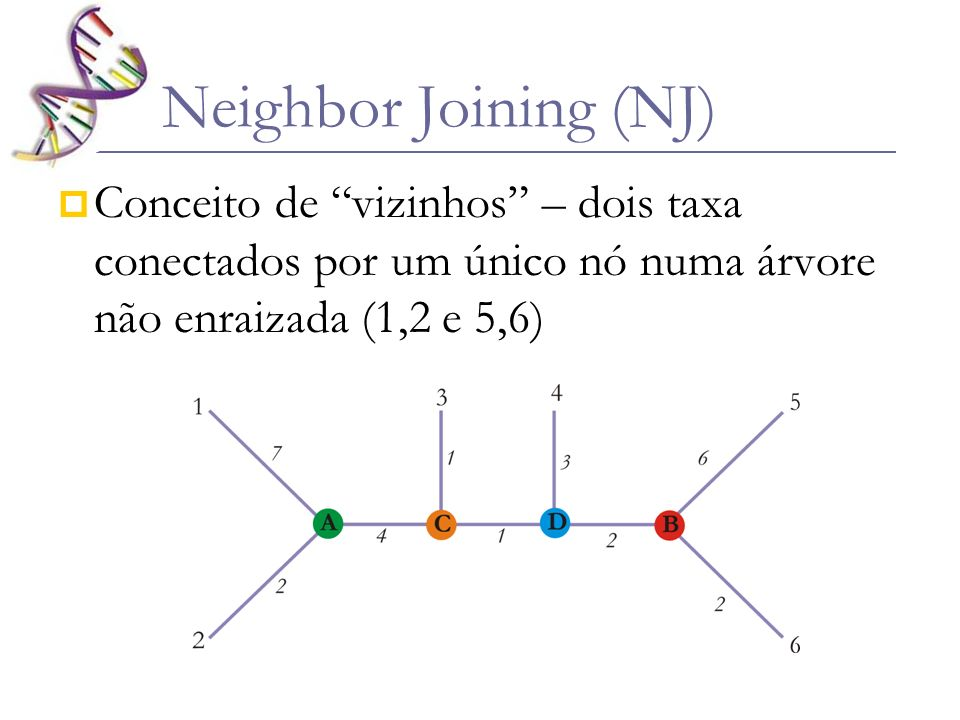 Neighbor Joining (NJ) Conceito de vizinhos – dois taxa conectados por um único nó numa árvore não enraizada (1,2 e 5,6)