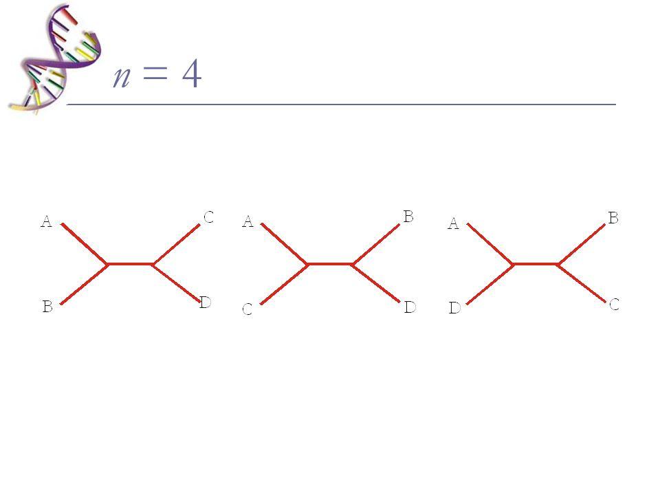n = 4