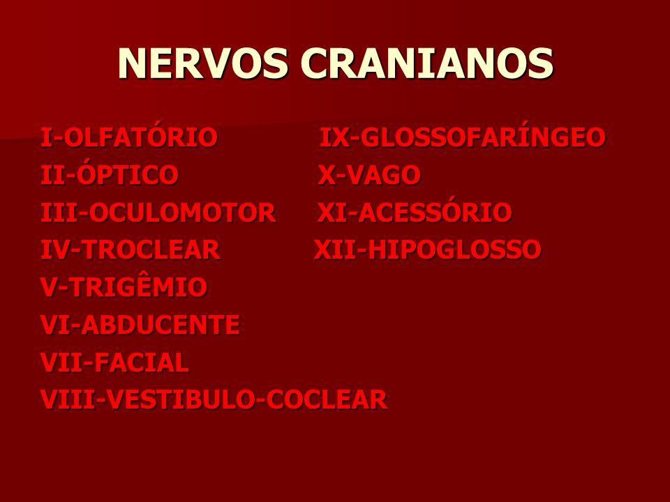 NERVOS CRANIANOS I-OLFATÓRIO IX-GLOSSOFARÍNGEO II-ÓPTICO X-VAGO