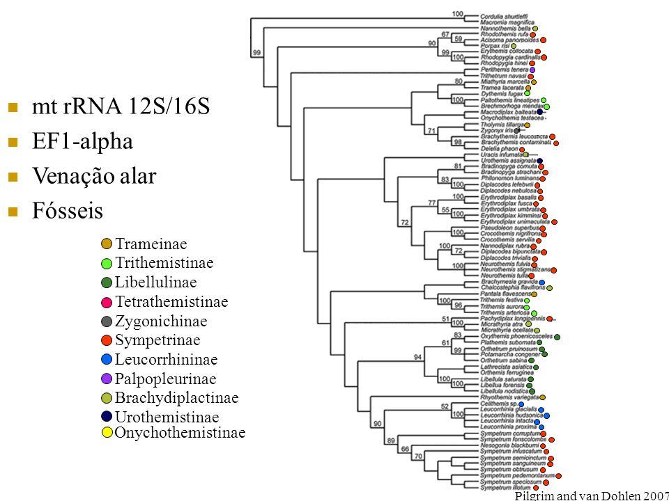 mt rRNA 12S/16S EF1-alpha Venação alar Fósseis Trameinae