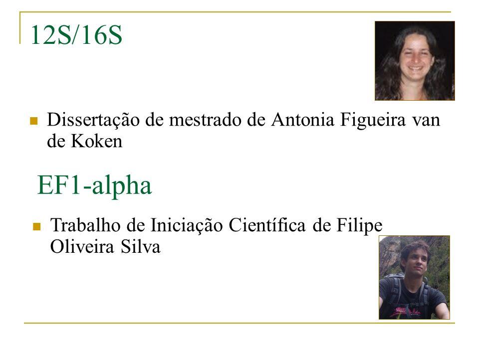 12S/16S Dissertação de mestrado de Antonia Figueira van de Koken.