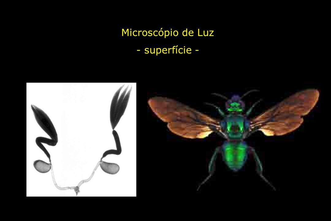 Microscópio de Luz - superfície -
