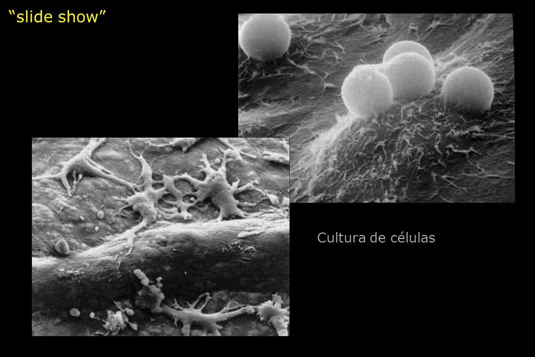 slide show Cultura de células