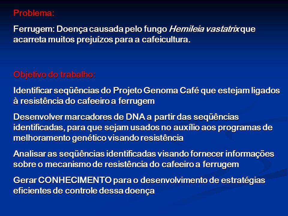 Problema: Ferrugem: Doença causada pelo fungo Hemileia vastatrix que acarreta muitos prejuízos para a cafeicultura.