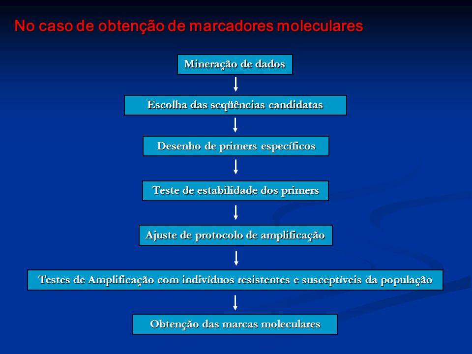 No caso de obtenção de marcadores moleculares