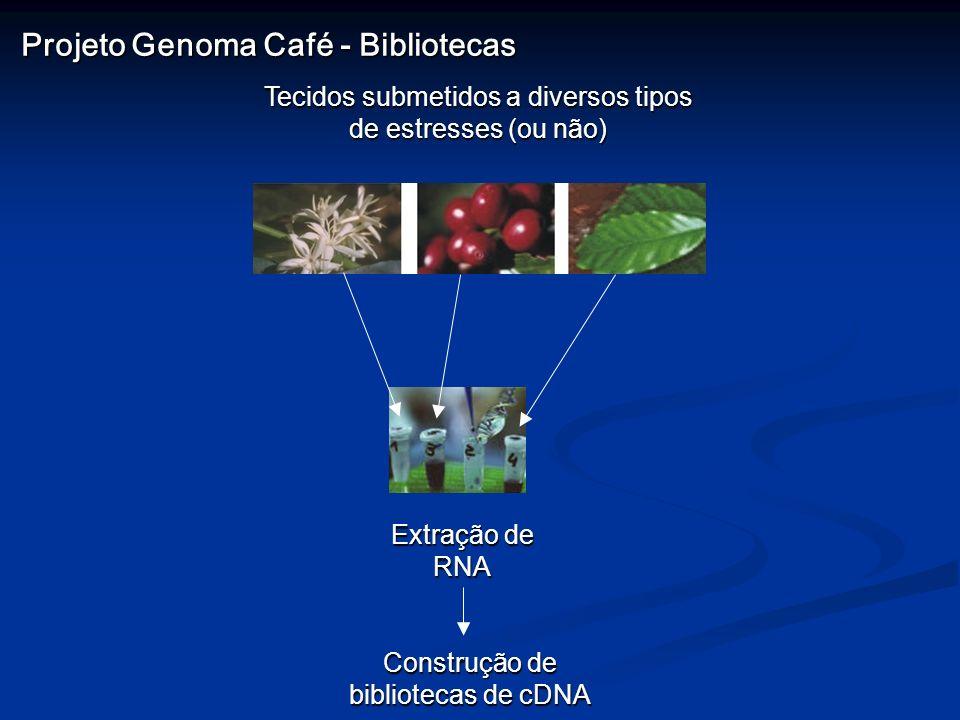 Projeto Genoma Café - Bibliotecas
