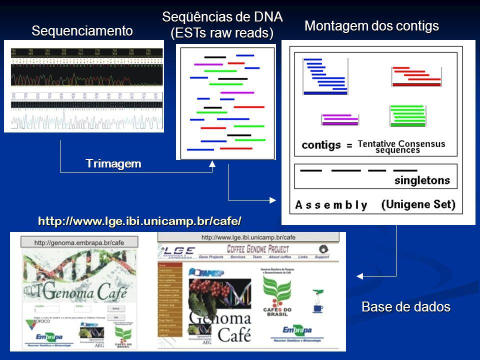Seqüências de DNA (ESTs raw reads)