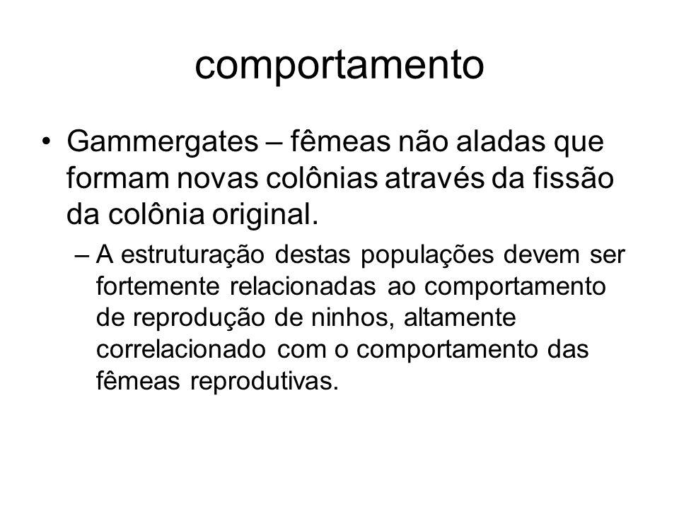 comportamento Gammergates – fêmeas não aladas que formam novas colônias através da fissão da colônia original.