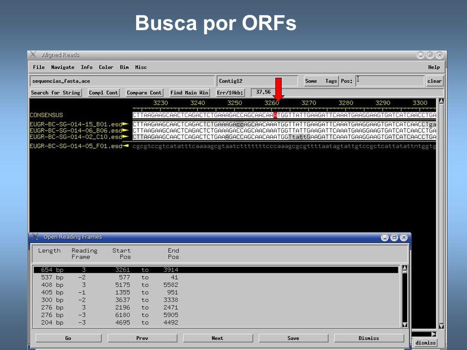 Busca por ORFs