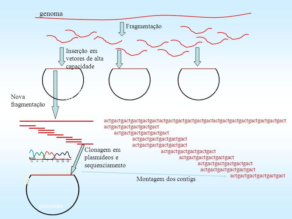 genoma Fragmentação Inserção em vetores de alta capacidade