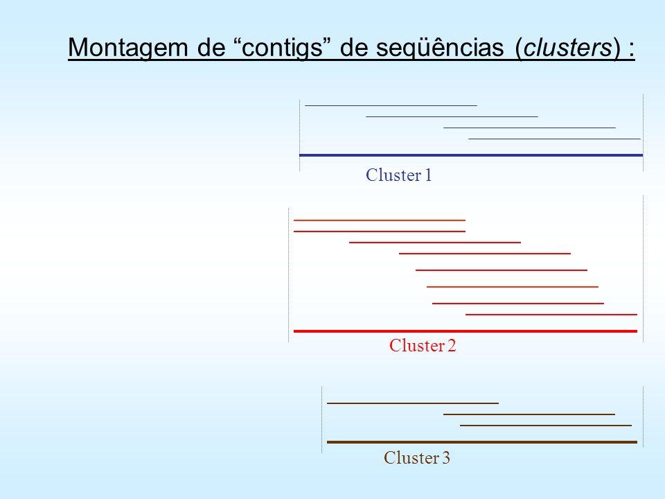 Montagem de contigs de seqüências (clusters) :