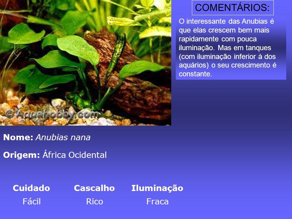 COMENTÁRIOS: Nome: Anubias nana Origem: África Ocidental Cuidado