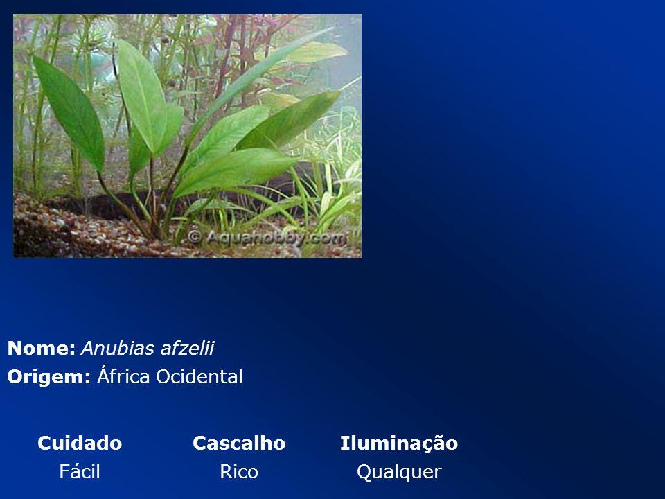 Nome: Anubias afzelii Origem: África Ocidental Cuidado Cascalho Iluminação Fácil Rico Qualquer