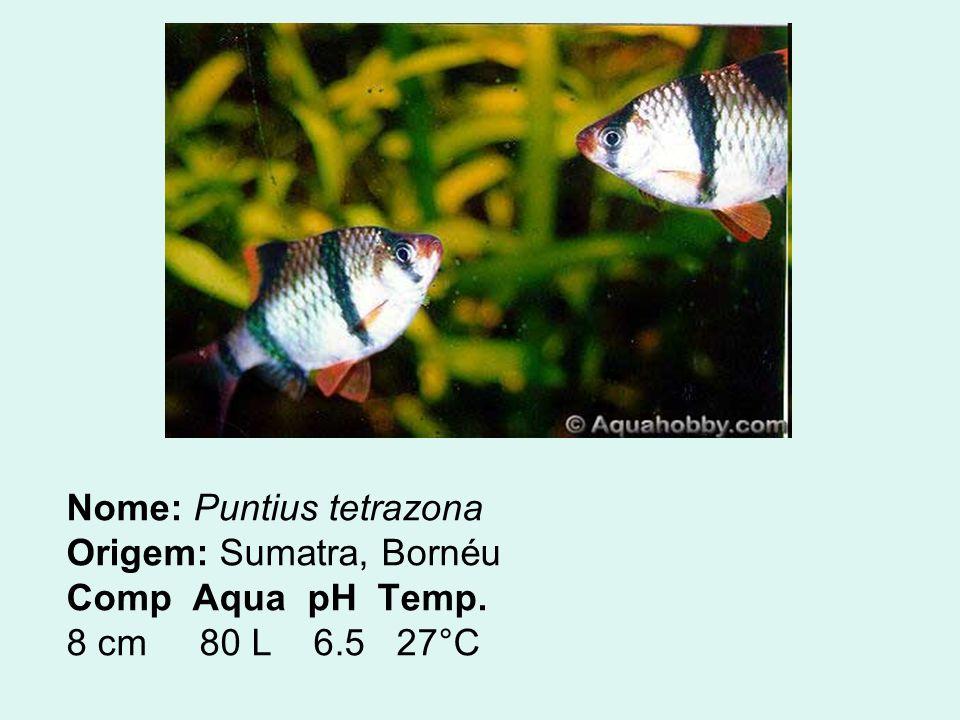 Nome: Puntius tetrazona Origem: Sumatra, Bornéu Comp Aqua pH Temp