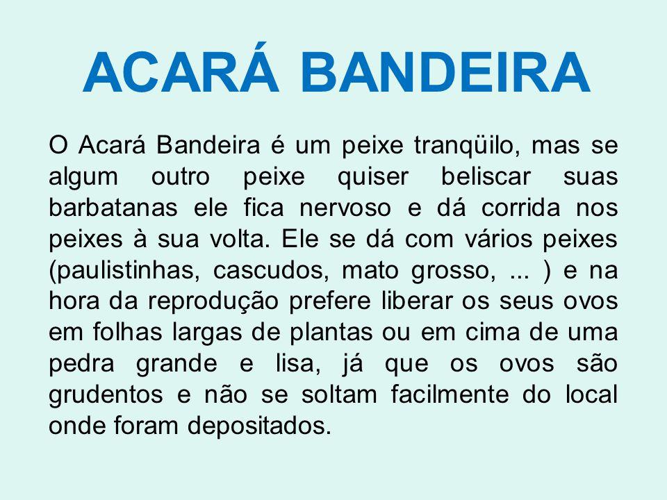 ACARÁ BANDEIRA