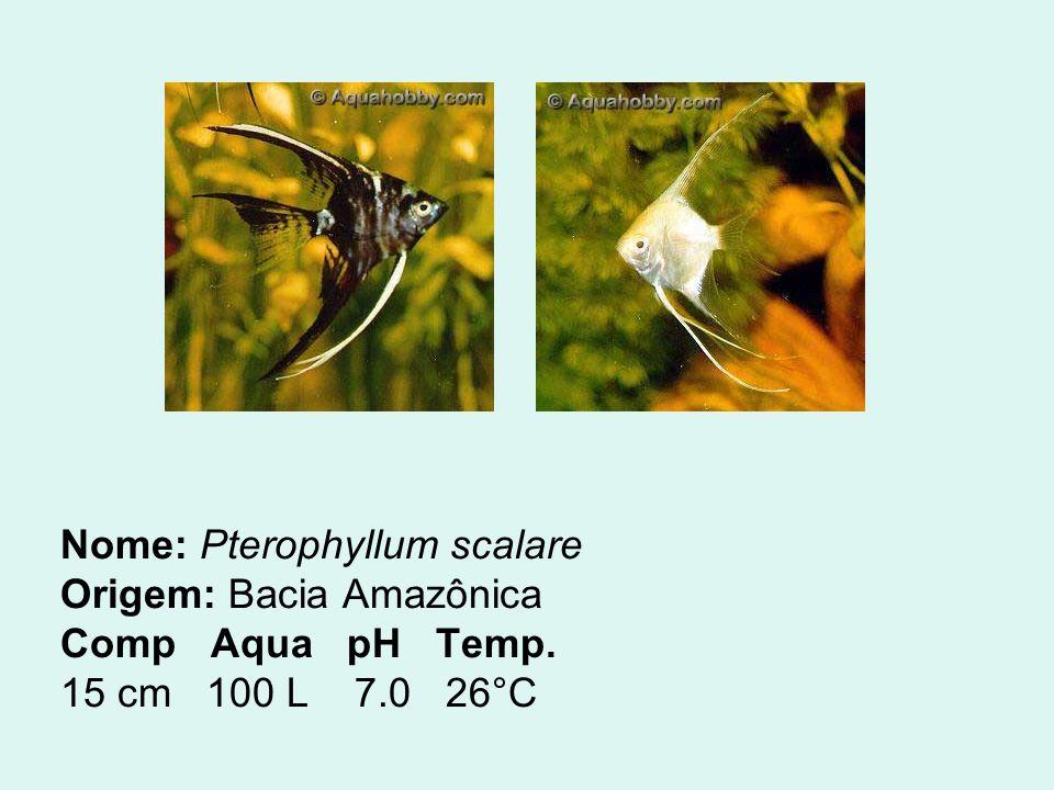 Nome: Pterophyllum scalare Origem: Bacia Amazônica Comp Aqua pH Temp