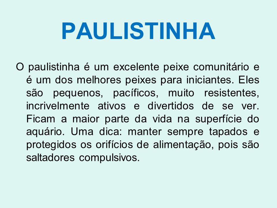 PAULISTINHA