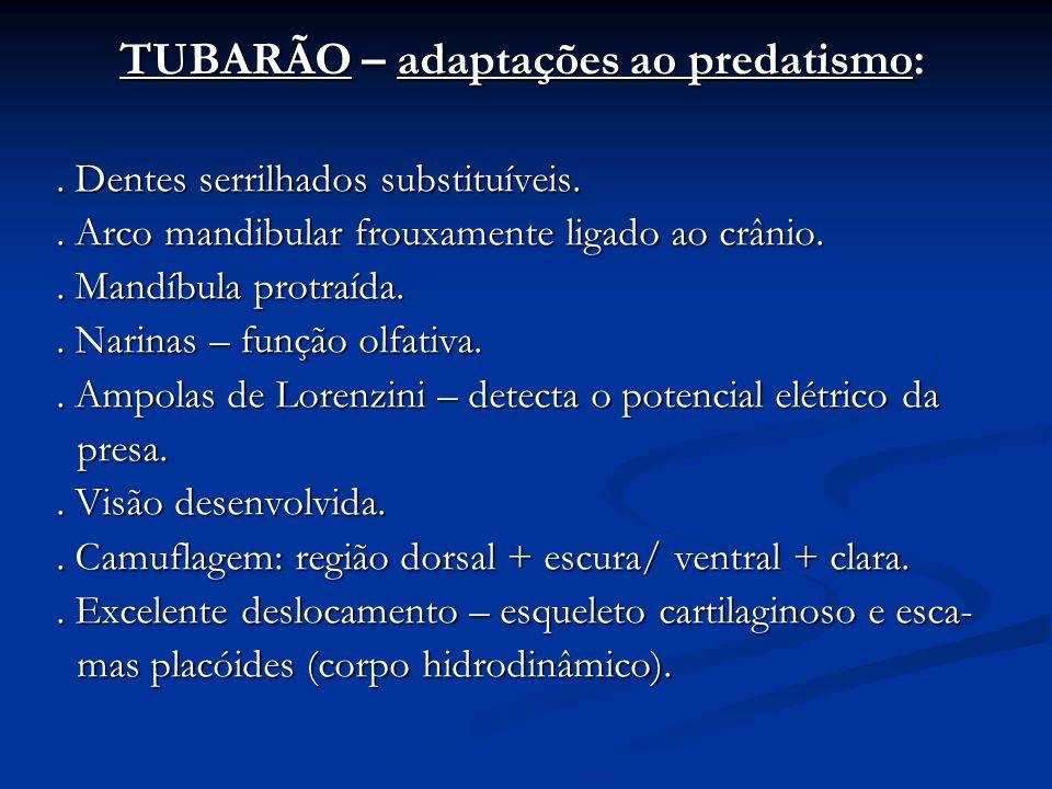TUBARÃO – adaptações ao predatismo: