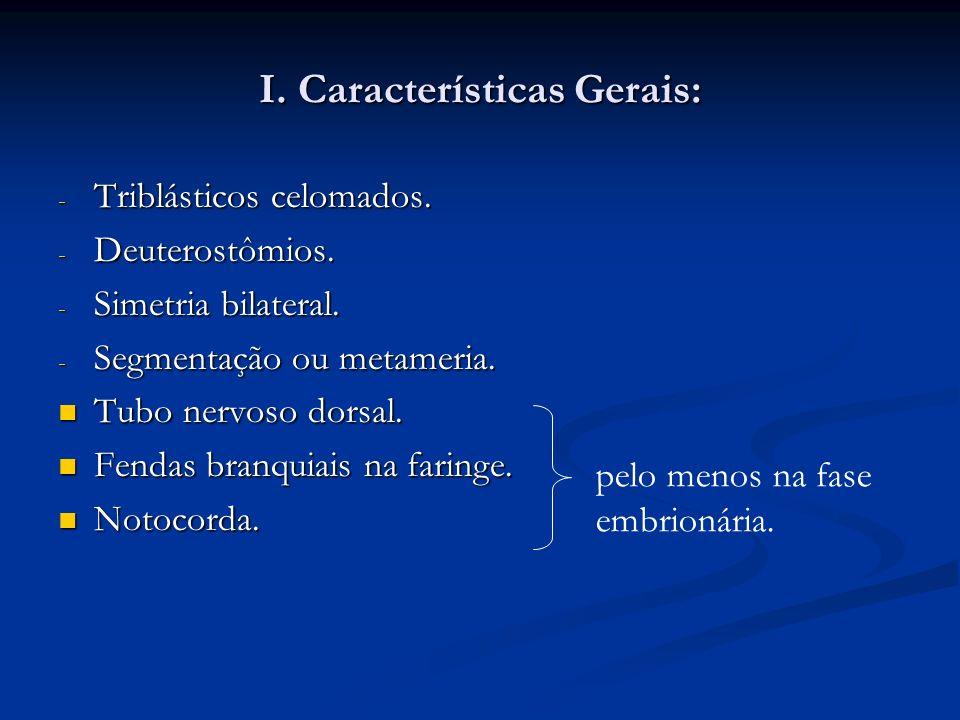 I. Características Gerais: