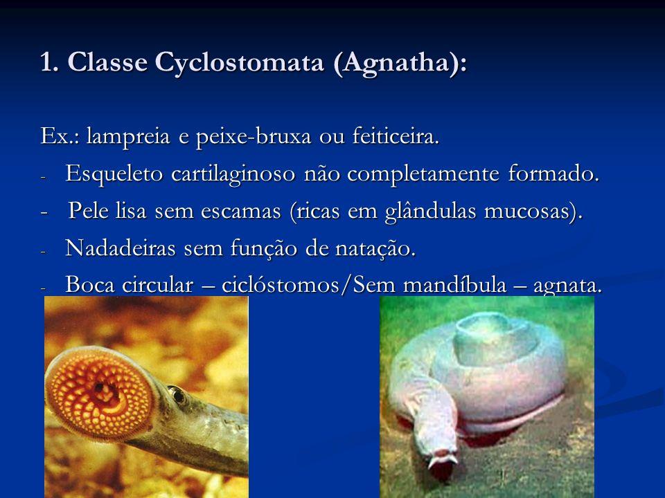 1. Classe Cyclostomata (Agnatha):