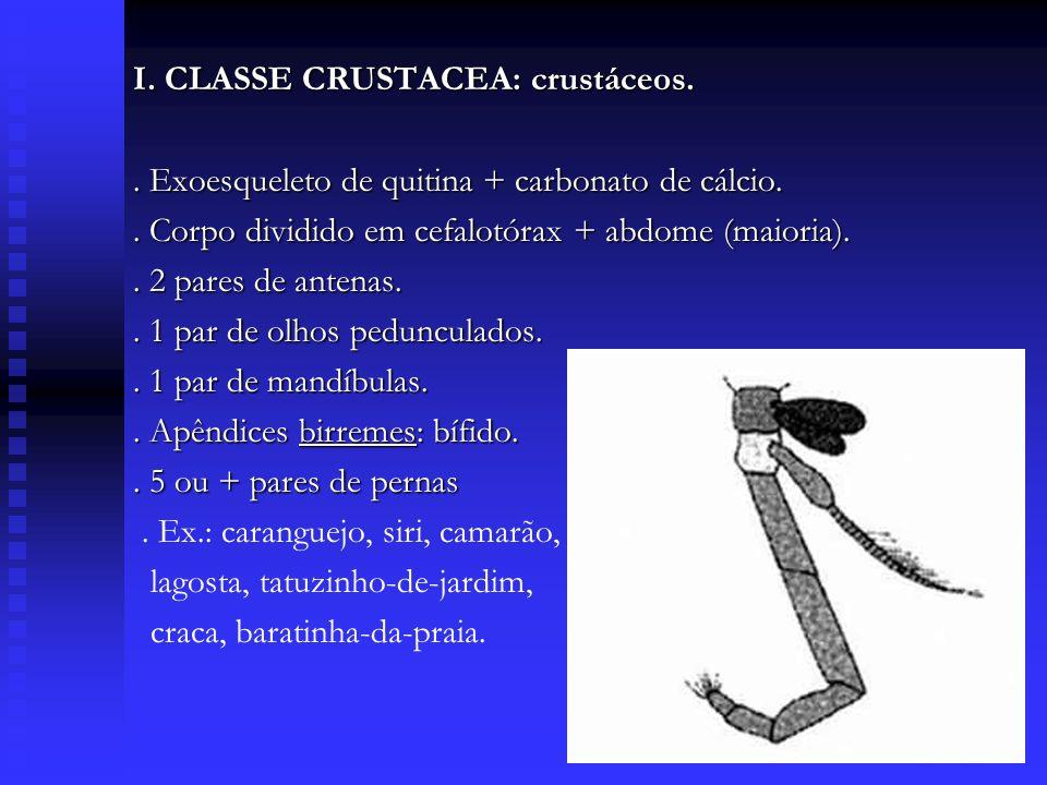 I. CLASSE CRUSTACEA: crustáceos.