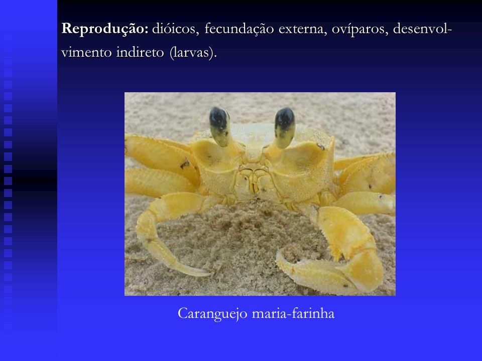 Reprodução: dióicos, fecundação externa, ovíparos, desenvol-