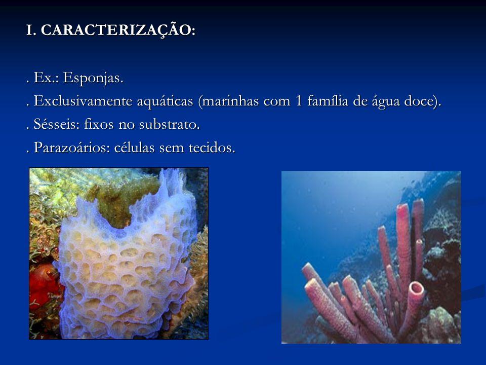 I. CARACTERIZAÇÃO:. Ex.: Esponjas. . Exclusivamente aquáticas (marinhas com 1 família de água doce).