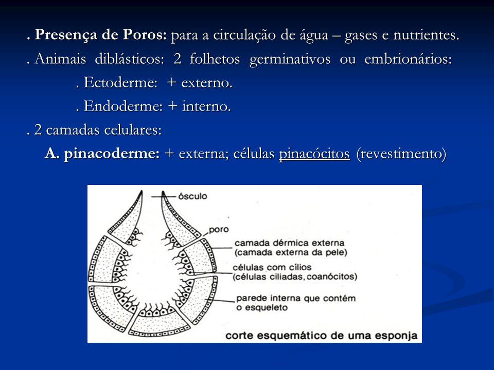 . Presença de Poros: para a circulação de água – gases e nutrientes.