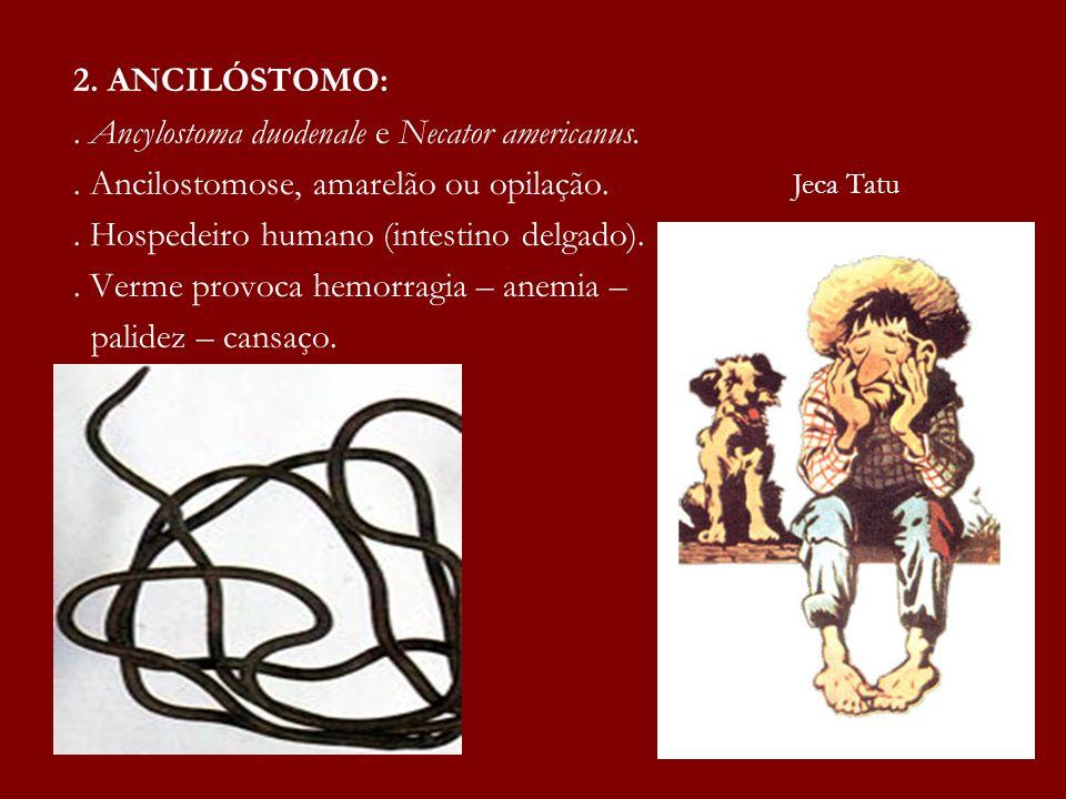 . Ancylostoma duodenale e Necator americanus.
