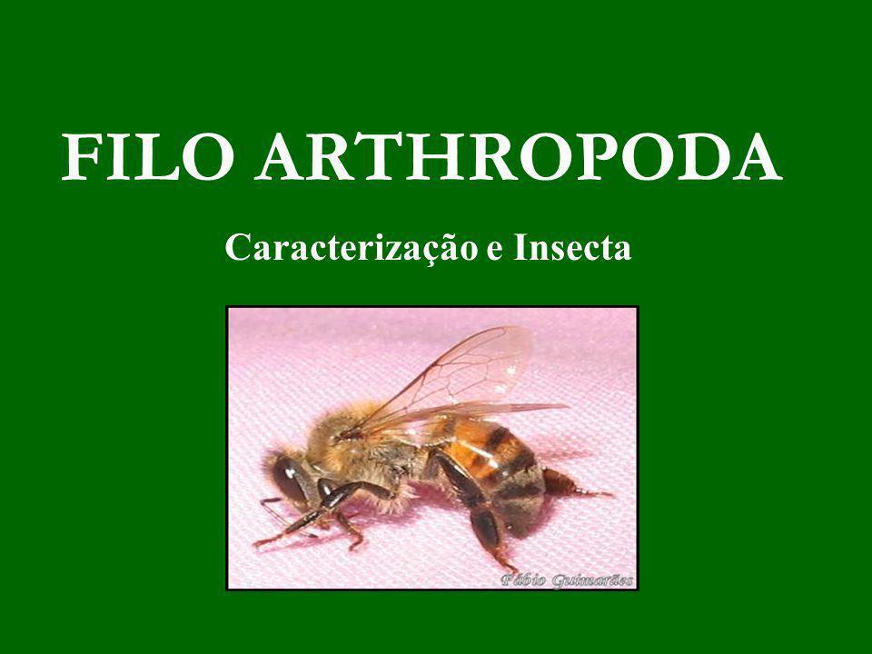 Caracterização e Insecta