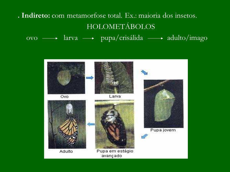 . Indireto: com metamorfose total. Ex.: maioria dos insetos.