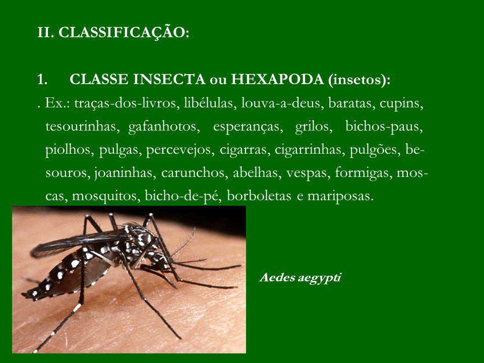 CLASSE INSECTA ou HEXAPODA (insetos):