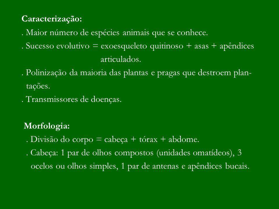 Caracterização: . Maior número de espécies animais que se conhece. . Sucesso evolutivo = exoesqueleto quitinoso + asas + apêndices.