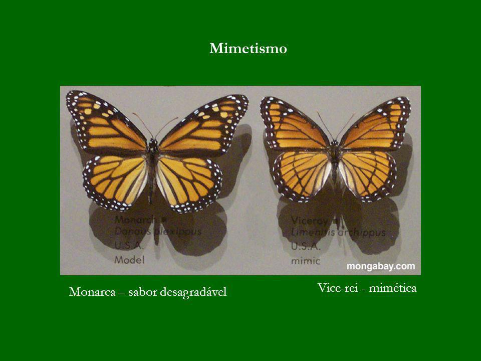 Mimetismo Vice-rei - mimética Monarca – sabor desagradável