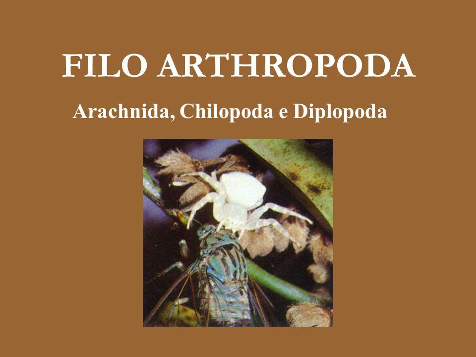 Arachnida, Chilopoda e Diplopoda