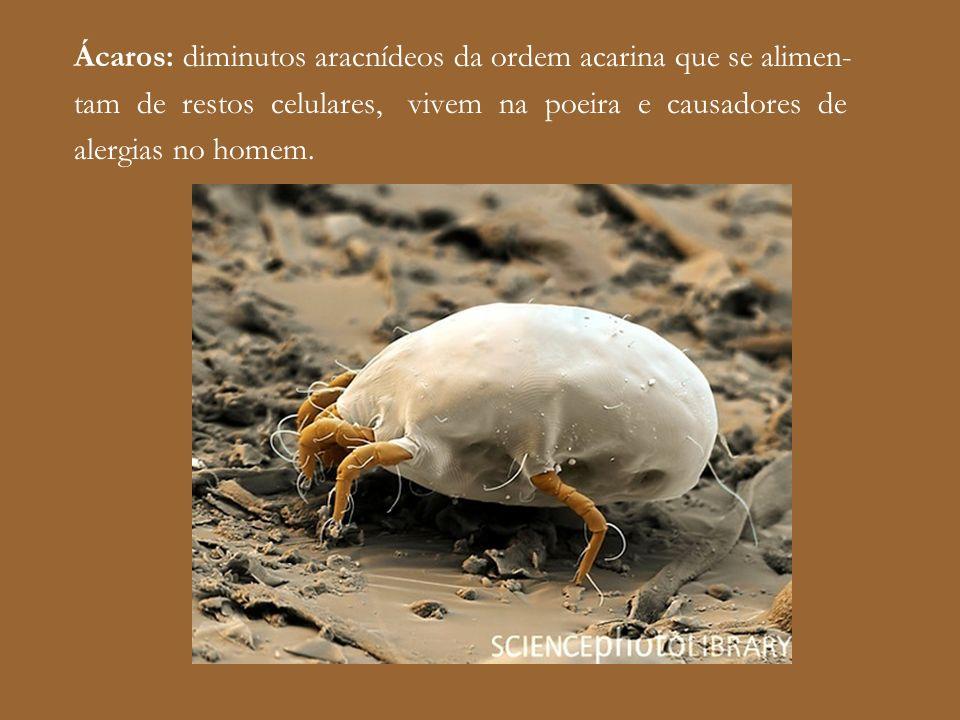 Ácaros: diminutos aracnídeos da ordem acarina que se alimen-