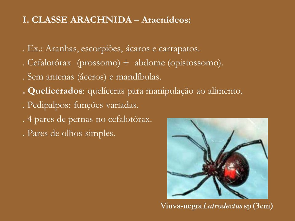 I. CLASSE ARACHNIDA – Aracnídeos:
