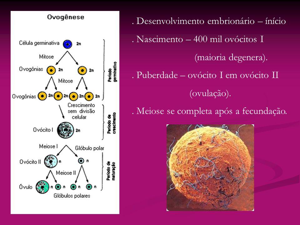 . Desenvolvimento embrionário – ínício